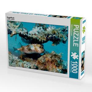 Kugelfisch 1000 Teile Puzzle quer