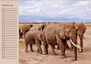 Afrikas schöne Tierwelt (Wandkalender 2020 DIN A2 quer)