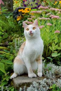 Premium Textil-Leinwand 60 cm x 90 cm hoch Aufmerksame Katze im