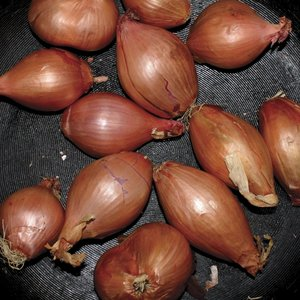 Fried Shallots (Limited 12 Inch EP)