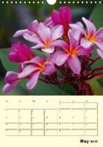 Schumann, B: Flower Shapes / UK-Version / Organizer