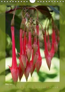 Fascinating Fuchsias (Wall Calendar 2015 DIN A4 Portrait)