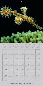 Seahorses and Related Species (Wall Calendar 2015 300 &times 300