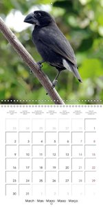 Galápagos Tour (Wall Calendar 2015 300 × 300 mm Square)