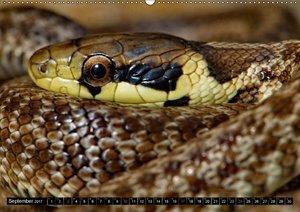 Einheimische Schlangen ganz nah