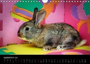 Les heureux lapins (Calendrier mural 2015 DIN A4 horizontal)