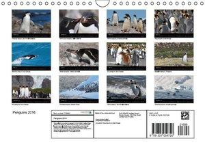 Penguins 2016 (Wall Calendar 2016 DIN A4 Landscape)