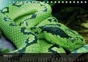 Giftschlangen (Tischkalender 2016 DIN A5 quer)