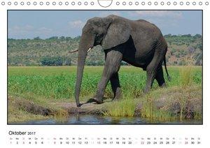 Rüsseltiere - Afrikanische Elefanten