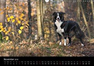 Border Collies - UK Version (Wall Calendar 2016 DIN A3 Landscape
