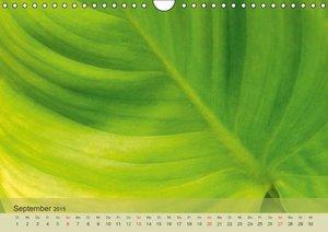 Ochsmann, S: Emotionen in Grün (Wandkalender 2015 DIN A4 que