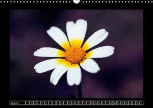 Stern, A: Blumeninsel Mallorca (Wandkalender 2015 DIN A3 que