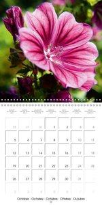 Laube, L: Nature's Pink Costume