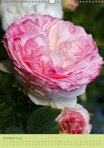 Symphony of Roses (Wall Calendar 2015 DIN A3 Portrait)