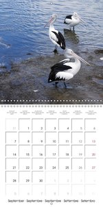 Wildlife Down Under (Wall Calendar 2015 300 × 300 mm Square)