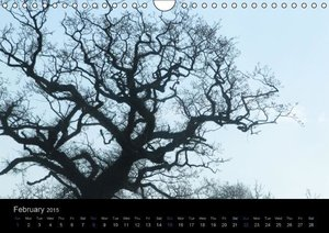 extraordinary trees (UK Version) (Wall Calendar 2015 DIN A4 Land