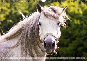 Dölling, A: Meine Freunde die Pferde (Wandkalender 2015 DIN