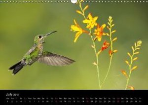 Beautiful Hummingbirds (Wall Calendar 2015 DIN A3 Landscape)