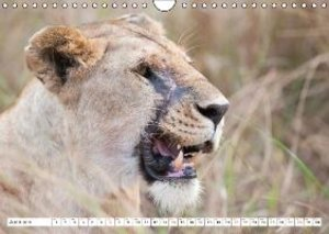 Emotional moments: lion faces UK Version (Wall Calendar 2015 DIN