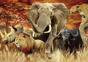 The Big Five. Puzzle 1000 Teile