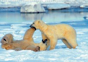 Eisbären (Posterbuch DIN A3 quer)