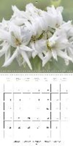 The White Garden (Wall Calendar 2015 300 × 300 mm Square)