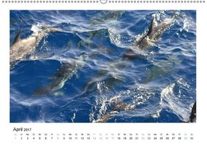 Eindrücke - La Gomera (Wandkalender 2017 DIN A2 quer)