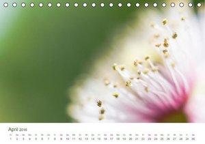 FARBKOLLISIONEN /BLÜTEN (Tischkalender 2016 DIN A5 quer)