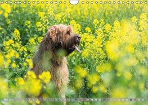 Briards - sanfte Riesen mit Temperament (Wandkalender 2016 DIN A