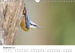 Krebs, A: Waldgezwitscher - Vögel unserer Wälder (Wandkalend