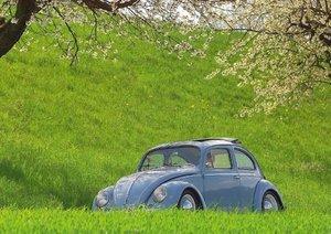 Beetles for Fans (Poster Book DIN A3 Landscape)