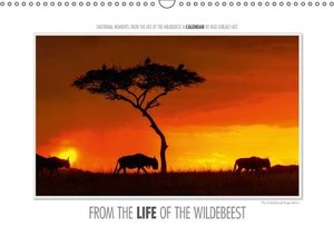 Gerlach, I: Emotional Moments: from the Life of the Wildebee