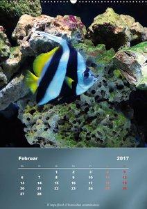 Bunte Riffbewohner - Fische, Anemonen und noch viel mehrCH-Versi