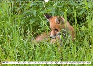 Emotionale Momente: Wilde Tiere in Deutschland (Wandkalender 201