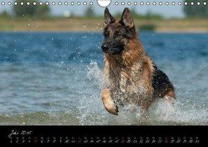 Schiller, P: Deutscher Schäferhund / CH-Version (Wandkalende