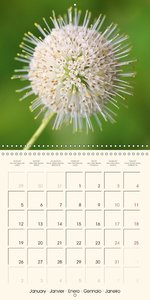 Summer Blossoms (Wall Calendar 2015 300 × 300 mm Square)