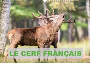 Le Cerf Français (Calendrier mural 2015 DIN A3 horizontal)