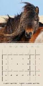 ICELANDIC HORSES from BRIMILSVELLIR (Wall Calendar 2015 300 &tim