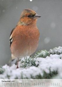 Vögel im heimischen Garten