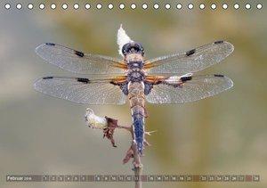 Libellen - Fliegende Edelsteine (Tischkalender 2016 DIN A5 quer)