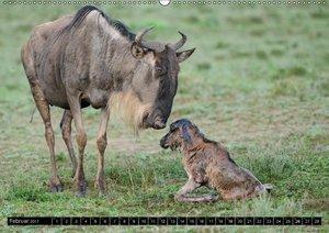 Magie des Augenblicks - Tierkinder - klein, aber wild