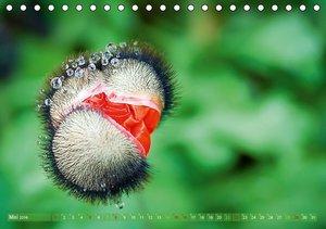 Wunderwelt der Blüten (Tischkalender 2016 DIN A5 quer)