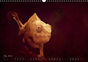 animals for home (Wall Calendar 2015 DIN A3 Landscape)