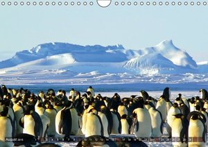 Penguins Unique and amazing birds (Wall Calendar 2015 DIN A4 Lan