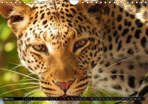 Big Cats . Faces of the most beautiful predators (Wall Calendar