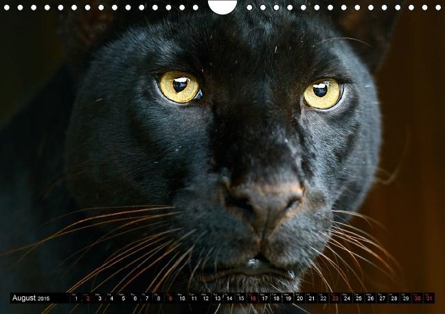 Big Cats . Faces of the most beautiful predators (Wall Calendar - zum Schließen ins Bild klicken