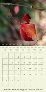 Autumn Reflections (Wall Calendar 2015 300 × 300 mm Square)
