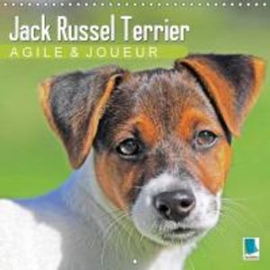 Calvendo: Jack Russell Terrier : Agile et Joueur
