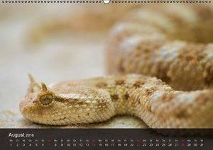 Giftschlangen (Wandkalender 2016 DIN A2 quer)