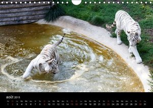 Les animaux du zoo (Calendrier mural 2015 DIN A4 horizontal)